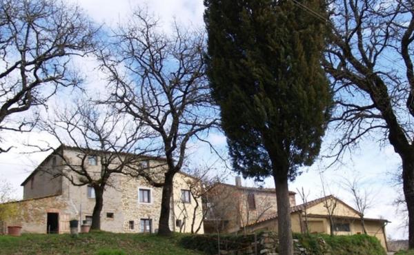 Azienda agricola con oliveto in vendita nel Chianti