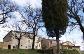 Azienda agricola con allevamento di cavalli ed oliveto in vendita nel Chianti